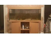 Juwel rio 240 Fish Tank and cabinet