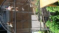 bird and rabbit cages
