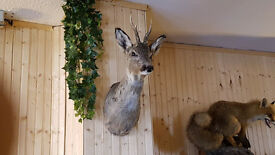 Taxidermy, Stuffed Animals have quite a few.