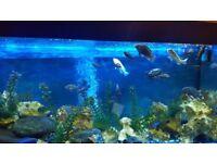 4ft jewel fish tank