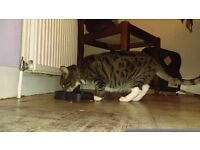Loving sociable cat for FREE *MUST GO TO A LOVING HOME*
