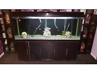 6ft fish tank full set up plus 2ft full set up