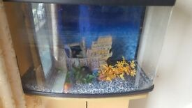 Beautiful 60 Litre Fish Tank with Stand and Filter pump and Pirate Ship !