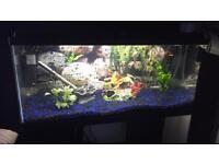 2 1/2 foot tropical fish tank