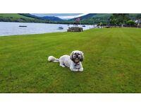 Pet friendly Cottage Loch Earn from 20 Aug, £670, sleeps 2-4 + pet, free fishing in the loch garden