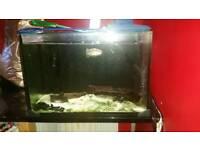 Amazonian Pufferfish complete setup