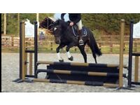 Lovely Mare for sale
