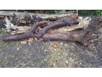 wood logs free to collect