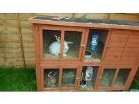 2 Male Rabbits and Double Hutch