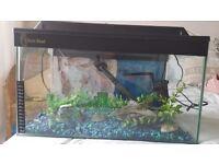 Small fish tank 18×10