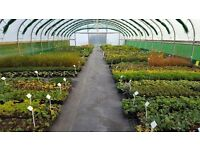 Wholesale plant nursery worker