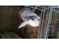 Beautiful rabbit