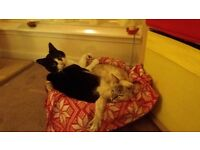"""2 charming cats to be rehomed"