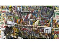 Yellow budgie cage accessories for sale