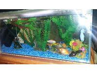 FISH TANK & FISH