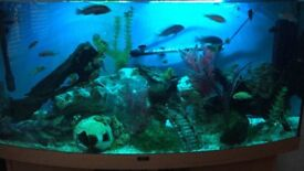 4ft juwel bow front fish tank