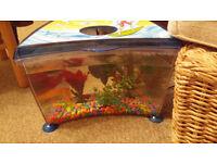 kids fish tank 6 months old