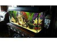 Fish tank, fish, accessories and new filter