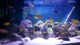 2 or 3 fish tank (looking)