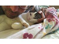 Missing baby cat