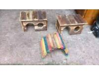 guinea pig playing houses and bridge