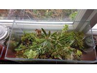 Terrarium with cacti and succulents