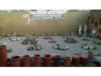 The Urban Rock Shop garden stone / rocks & decor