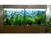 Tropical freshwater fish for sale
