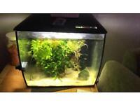 2 fluval aquariums