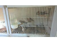 finches for sale about 20. offers. also please read.