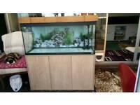 Fish tank aquarium fluval roma 240 4 foot long