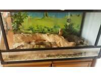 King snake + vivarium
