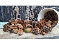 Pine Cones - Extra large and small sizes