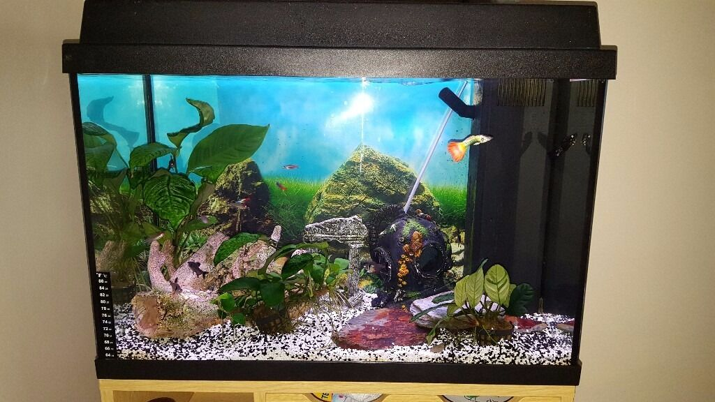 Juwel Rekord 600 Fish Tank with FishEstablishedin Drayton, NorfolkGumtree - Juwel Rekord 600 Fish Tank with Tropical Fish Established since January Lovely starter fish tank, 60 litre, with LED light unit Juwel Bioflow Filter & Pump Juwel Water Heater Also to include 3 live plants 1 x Artifical Mangrove root Medium Temple...
