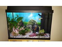 Juwel Rekord 600 Fish Tank with Fish - Established