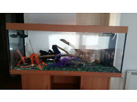 5 FT JUWEL RIO 450 LITER FISH TANK AND STAND,FULL SET UP,,LESS THEN YEAR OLD SET UP