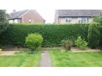 Hedge cutting from £15