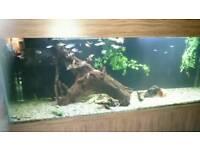 7foot fish tank.