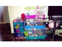 hamster cage with all accessories, ball and wheel