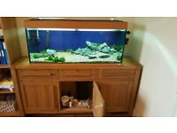 Juwel 240L fish tank, Fluval 406 filter pump and cabinet