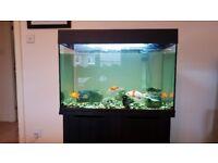 5 x Goldfish + Tank + Accessories