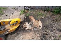 TREE STUMP REMOVAL, AND LANDSCAPES WEST lONDON