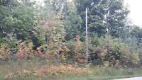 Vacant Land for Sale, Part Lot 9 County Road 18, Sydenham Twp.