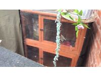 Rabbit guinea pig hutch cage with winter cover. 6 months old