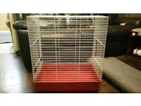 bird parakeet budgie canary love bird cage