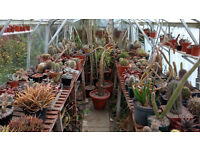 100s of Cacti and succulents