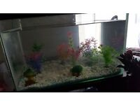 42 litre fish tank and accessories