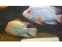 2 DEVIL FISH