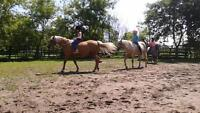 Horse Camp at Black Creek Stables