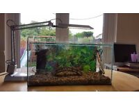 Clear Seal fish tank 50 litres